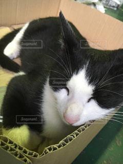白い面の上に横たわる猫の写真・画像素材[791767]