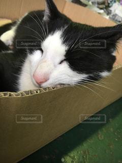 近くに猫のアップの写真・画像素材[791771]