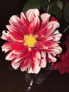 テーブルの上の花瓶の写真・画像素材[2871729]