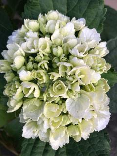 花をクローズアップするの写真・画像素材[2875433]