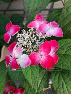 花をクローズアップするの写真・画像素材[2875435]