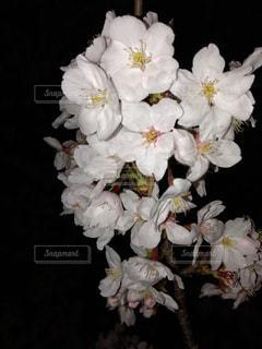 花をクローズアップするの写真・画像素材[2875619]