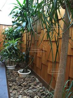 庭の植物の写真・画像素材[2876024]
