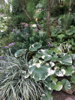 庭の植物の写真・画像素材[2877379]