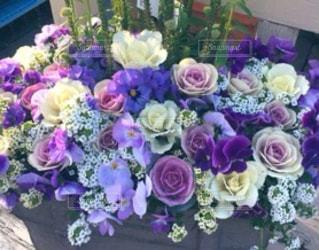 花をクローズアップするの写真・画像素材[2878475]