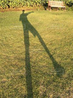 緑の野原で男の写真・画像素材[793737]