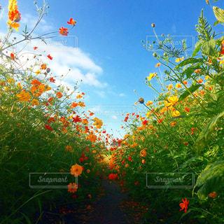 フィールドのカラフルな花のグループ - No.792198