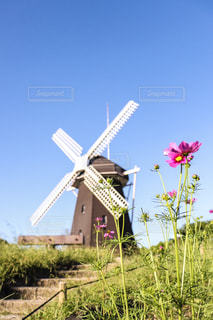 風車とコスモスの写真・画像素材[793347]