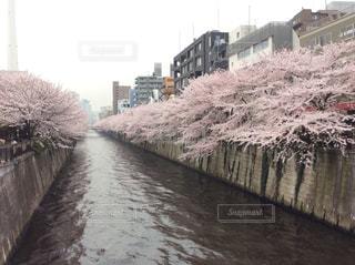 目黒川 - No.793655