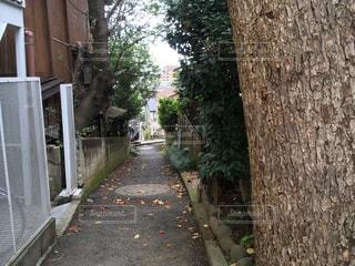 住宅街の路地裏と樹木の写真・画像素材[793639]