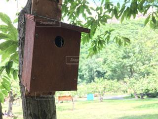 自然の中にある木の巣箱の写真・画像素材[793643]