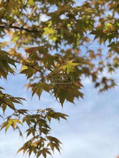 とある秋晴れ。の写真・画像素材[793776]