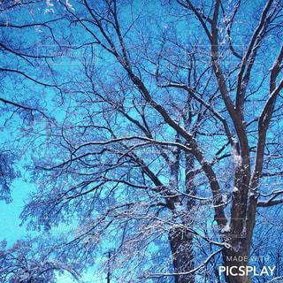フォレスト内のツリーの写真・画像素材[806140]