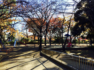 秋の公園の写真・画像素材[806165]