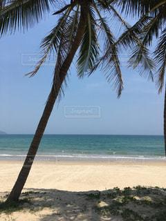 ヤシの木とビーチの写真・画像素材[793846]