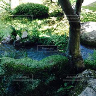 背景の水の庭の写真・画像素材[793871]