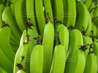 緑のバナナの束の写真・画像素材[796249]
