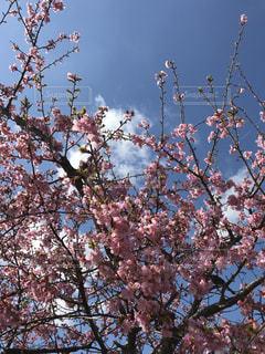 木の枝に止まっている鳥たちの群れの写真・画像素材[1125438]