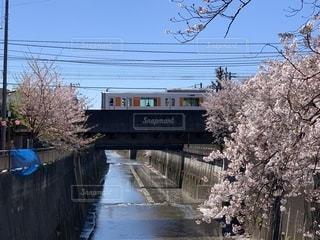 桜と鉄道の写真・画像素材[2010883]