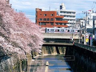 桜と鉄道の写真・画像素材[2010887]