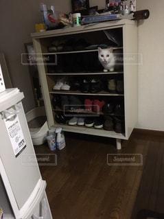 下駄箱猫の写真・画像素材[794534]