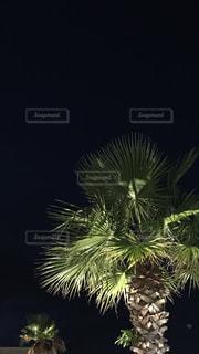 ヤシの木の写真・画像素材[794633]