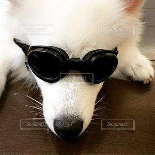 近くに犬のサングラスのアップの写真・画像素材[794634]