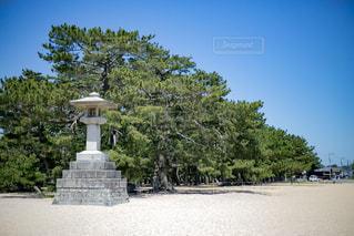 津田の松原の写真・画像素材[799664]