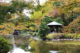木々 に囲まれた池の写真・画像素材[865759]