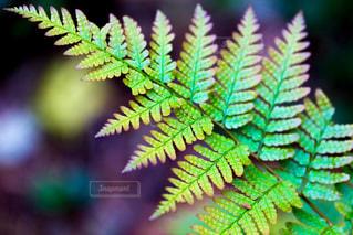 虹色の葉の写真・画像素材[867761]