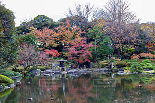 木々 に囲まれた池の写真・画像素材[875782]