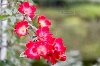 近くの花のアップの写真・画像素材[875786]