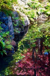 水面上の紅葉の写真・画像素材[875840]