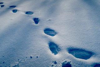 足跡の写真・画像素材[972919]