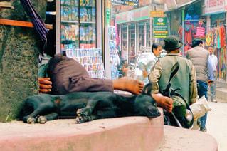 犬と眠るオトコの写真・画像素材[922794]