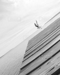 空を飛んでいる鳥の写真・画像素材[795631]