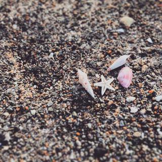 砂浜の写真・画像素材[795869]
