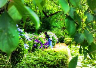 緑豊かなの森の中の写真・画像素材[806466]