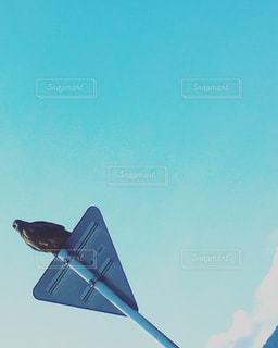 ひとやすみする鳥の写真・画像素材[807285]