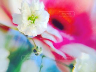 colorful flowerの写真・画像素材[818644]
