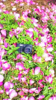 カメラの写真・画像素材[818672]
