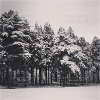 雪の写真・画像素材[822382]
