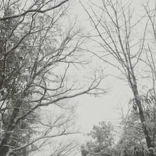 雪 - No.822383