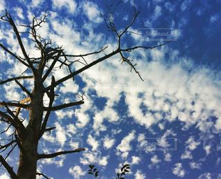 うろこ雲の写真・画像素材[826265]
