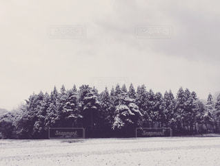 雪景色の写真・画像素材[908112]