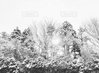 朝空の写真・画像素材[988794]