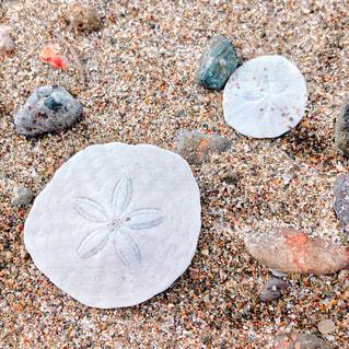 海で拾ったものの写真・画像素材[2255494]