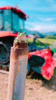 カエルのたそがれの写真・画像素材[2505719]