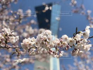 花の写真・画像素材[1096568]