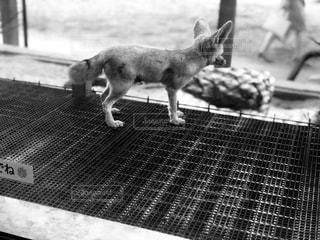 歩道の上を歩く犬の写真・画像素材[1275511]